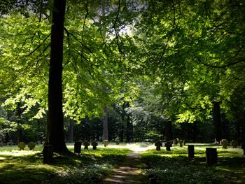 Friedhof Grünfläche