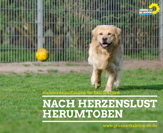 Hund spielt mit Ball auf einer Wiese